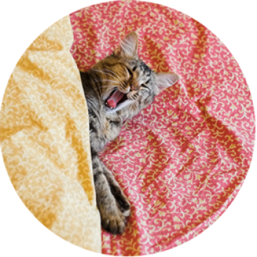 catBOARDING_HOME300pxROUND-avalanchepicturescompany.png