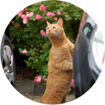 petTaxi_HOME300pxROUND-avalanchepicturescompany.png